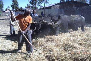 Oduu - Afaan Oromo Online   Marsariitii Barnoota Afaan Oromoo